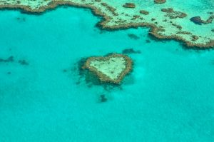 Amazing view on Corals at Great Barrier Reef, Australia